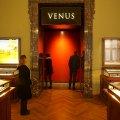 Sie bekommt natürlich einen besonderen Auftritt: die Venus von Willendorf, 1908 entdeckt, ist eine rund 11 cm große und 29.500 Jahre alte Venusfigurine aus dem Gravettien