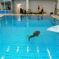 23. Februar 2013 - Training in der Schwimmhalle Ankogelweg